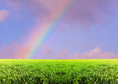 Arco iris en campo — Foto de Stock