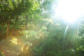 Rain forest in Hawaii — Stock Photo