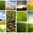 Fields collage — Stock Photo #5828626