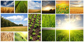 Fields collage — Stockfoto