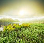 Mgła na łące — Zdjęcie stockowe