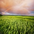 Rainbow in field — Stock Photo