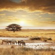 Royalty-Free Stock Photo: Safari