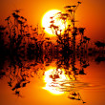 Flowers on sunset — Stock Photo