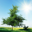 Alone tree — Stock Photo #6560729