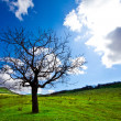 Alone tree — Stock Photo