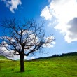 Alone tree — Stock Photo #6560730