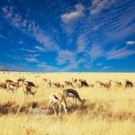 Antelope — Stock Photo #6561160