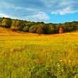 Stock Photo: Autumn grassland