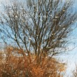 autumn tree — Stock Photo #6561880