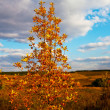 autumn tree — Stock Photo #6561888