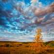 autumn tree — Stock Photo #6561890