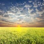 Field on sunset — Stock Photo #6564093