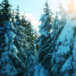 Frozen trees — Stock Photo #6564418