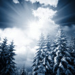 Frozen trees — Stock Photo #6564419