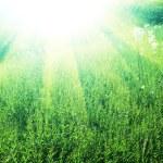 Grassland — Stock Photo #6564780