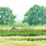 Grassland — Stock Photo #6564796