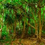 Jungle — Stock Photo #6565319