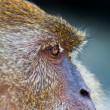 Monkey — Stock Photo #6566419