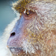 Monkey — Stock Photo #6566420