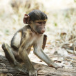 Monkey — Stock Photo #6566423