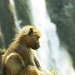 Monkey — Stock Photo #6566426