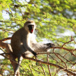 Monkey — Stock Photo #6566432