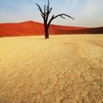 Namib desert — Stock Photo #6566801