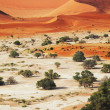 Namib - Stock Photo