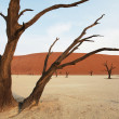 Stock Photo: Namibia
