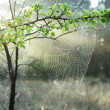 Spider-web — Stock Photo