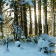 Winter forest — Stock Photo #6568956