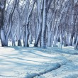 Winter forest — Stock Photo #6568960