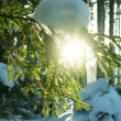 Winter in forest — Stockfoto