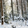 Winter in bos — Stockfoto