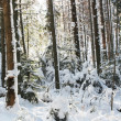 vinter i skogen — Stockfoto #6569007