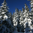 Stock Photo: Winter in forest