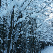 Winter in forest — Stockfoto #6569021