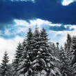 Winter in forest — Stockfoto #6569023