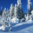 Winter in forest — Stockfoto #6569025