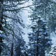 Winter in forest — Stockfoto #6569030