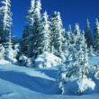 Winter in forest — Stockfoto #6569035