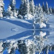 winter im wald — Stockfoto #6569039