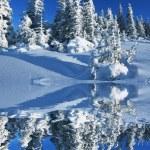 Зима в лесу — Стоковое фото