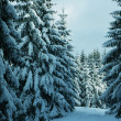 Winter in the forest — Stock Photo