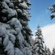 Winter in the forest — Stockfoto