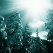 Stock Photo: Winter in the forest