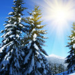 Winter im Wald — Stockfoto #6569080
