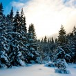 Winter season in  forest - Stockfoto