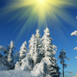 Winter - Stockfoto